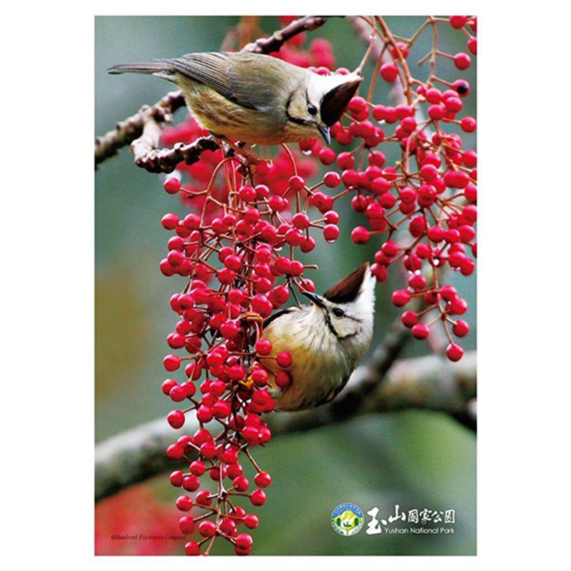 玉山(鳥類系列)冠羽畫眉拼圖108片