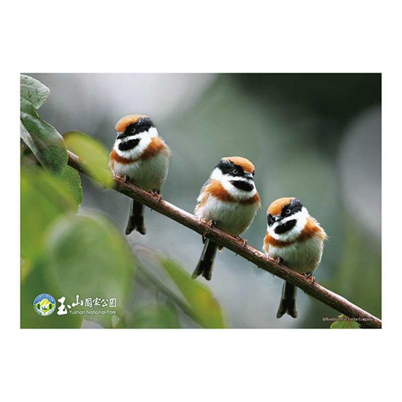 玉山(鳥類系列)紅頭山雀拼圖108片