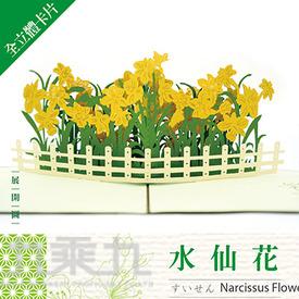 立體卡片 Narcissus Flower 水仙花 15*15